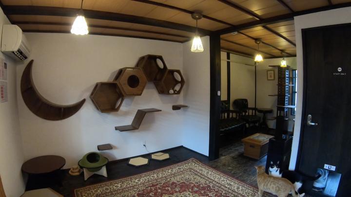 2階は猫カフェスペース