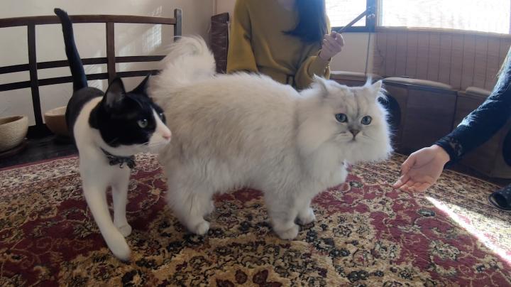 個性豊かな猫達がたくさん