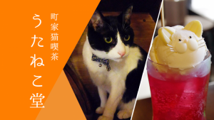 京を感じる猫カフェ「町家猫喫茶うたねこ堂」